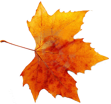 11-2-autumn-free-png-image.png